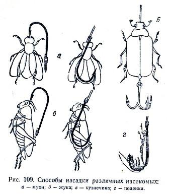 сбор и ловля жуков